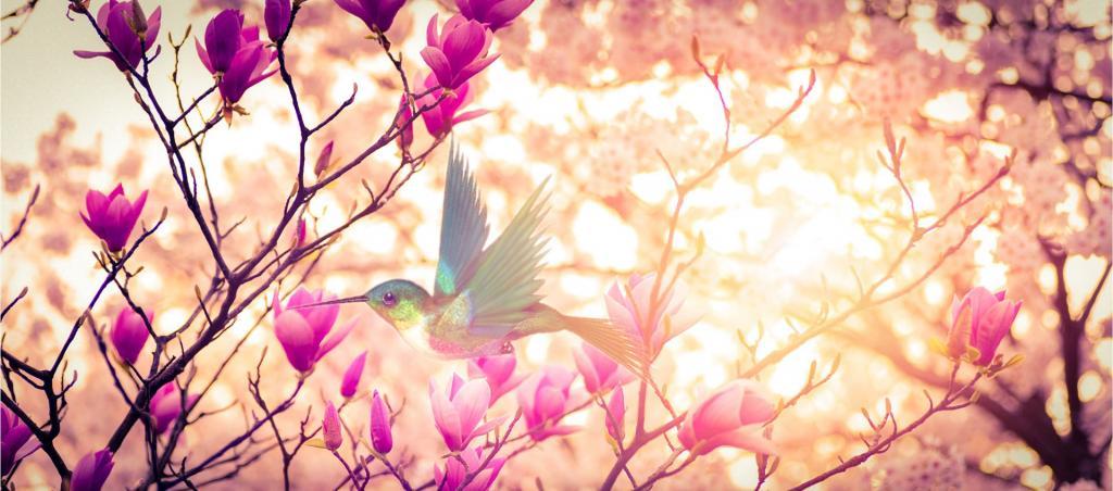 Magnolia en fleurs avec un colibri
