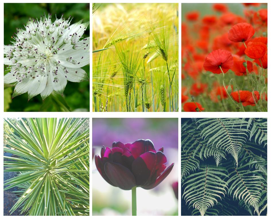 photo de plantes et de fleurs : tulipe, fougere